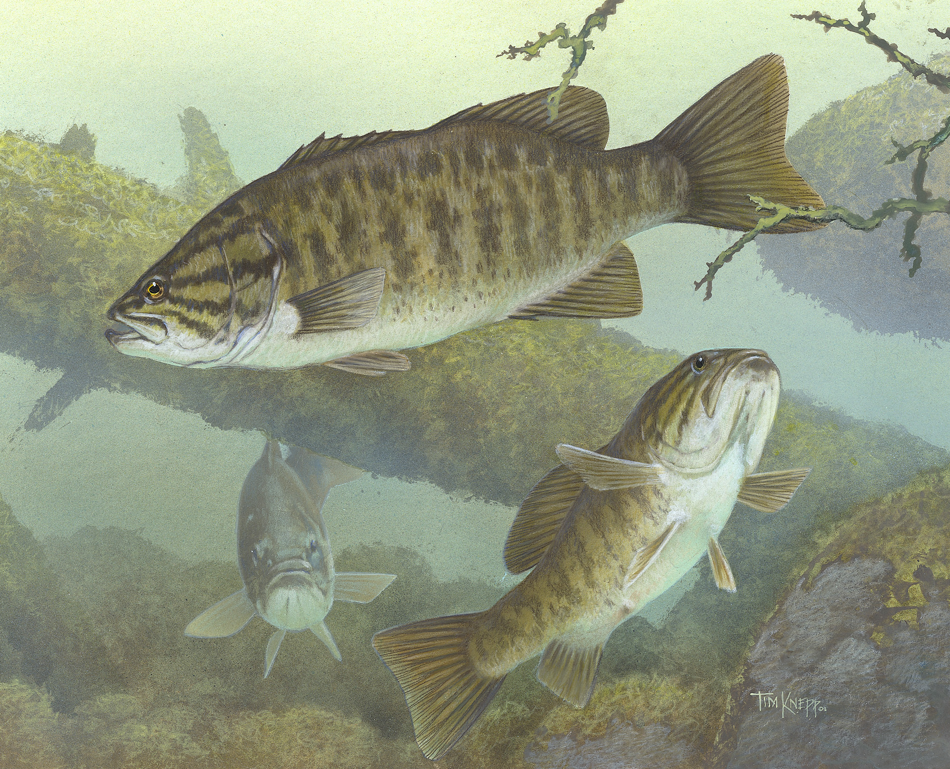 File smallmouth bass the work of god 39 s children for Missouri bass fishing