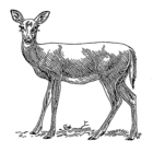 Doe a Deer 002.png