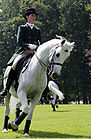Lipizzaner Stallion Horse at Brdo Castle near Kranj Slovenia 20080610.jpg