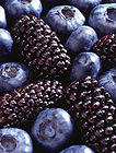 Blackberries And Blueberries 001.jpg