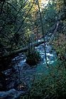 Hidden Creek in Fall Colors.jpg
