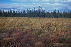 Kenai National Wildlife Refuge Landscape.jpg