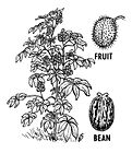 Castor Bean Plant and Fruit 001.jpg