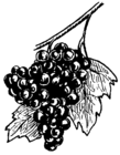 Grape 001.png